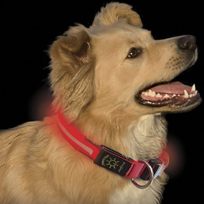 Nite Ize Nite Dawg Pet Collar Red, Medium, Easily spot your dog even in the dark